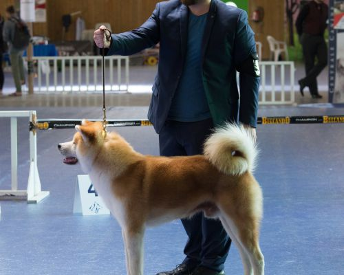 World Japanese Dog Show Paris 2018