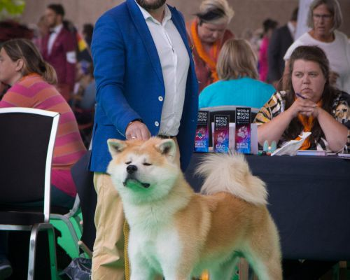 World Dog Show Amsterdam 2018