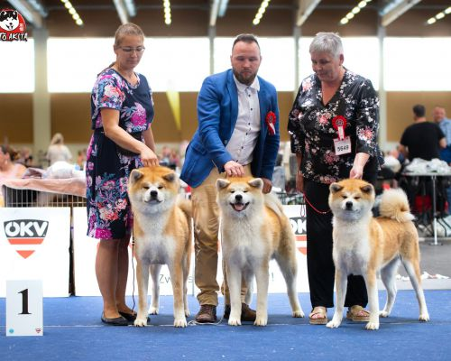 European Dog Show Wels 2019